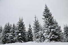 Paisaje de hadas del invierno con los abetos Fotografía de archivo
