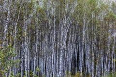 Paisaje de Inner Mongolia Fotos de archivo