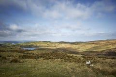 Paisaje de Irlanda fotografía de archivo libre de regalías
