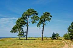 Paisaje de Karosta con los árboles de pino a lo largo de la playa del mar Báltico en Liepaja, Letonia Imagen de archivo libre de regalías