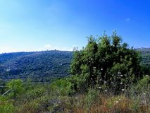 Paisaje de Líbano Fotografía de archivo