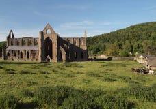 Paisaje de la abadía de Tintern Imagen de archivo libre de regalías