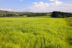 Paisaje de la agricultura Foto de archivo libre de regalías