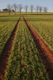 Paisaje de la agricultura Imagen de archivo