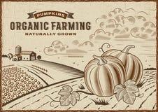 Paisaje de la agricultura biológica de la calabaza Fotos de archivo libres de regalías