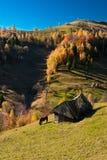 Paisaje de la aldea en Rumania Imágenes de archivo libres de regalías