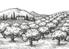 Paisaje de la arboleda verde oliva