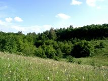 Paisaje de la bosque-estepa Foto de archivo
