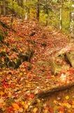 Paisaje de la caída Imagen de archivo libre de regalías