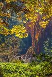 Paisaje de la caída del otoño Imagenes de archivo