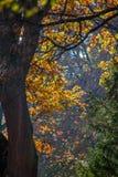 Paisaje de la caída del otoño Foto de archivo