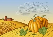 Paisaje de la cosecha de la calabaza stock de ilustración