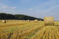 Paisaje de la cosecha del trigo Fotos de archivo libres de regalías