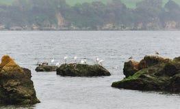Paisaje de la costa con las garzas en las rocas Imagenes de archivo