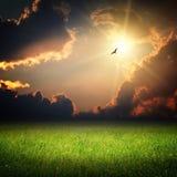 Paisaje de la fantasía. Puesta del sol mágica y pájaro Imágenes de archivo libres de regalías