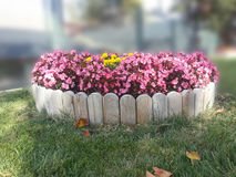 Paisaje de la flor Fotos de archivo libres de regalías