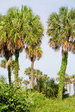 Paisaje de la Florida Imagen de archivo