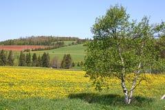 Paisaje de la granja Fotografía de archivo