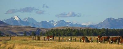 Paisaje de la granja de Nueva Zelandia Fotos de archivo