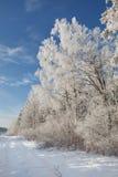 Paisaje de la helada del invierno Foto de archivo