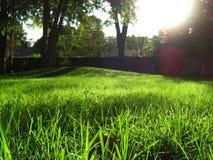 Paisaje de la hierba verde fotos de archivo