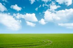 Paisaje de la hierba verde y del cielo azul Fotografía de archivo libre de regalías