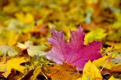 Paisaje de la hoja del otoño Fotografía de archivo