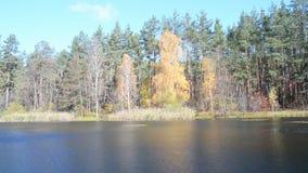 Paisaje de la luz del día del otoño metrajes