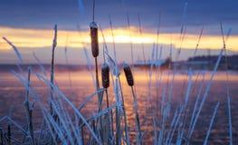 Paisaje de la mañana del invierno en el río con la niebla y las cañas Rusia, los Urales Foto de archivo libre de regalías