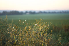 Paisaje de la mañana Salida del sol detrás del pueblo en el campo Foto de archivo libre de regalías