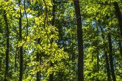 Paisaje de la maleza del bosque dentro de un bosque en las monta?as de Apennines imágenes de archivo libres de regalías