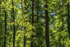 Paisaje de la maleza del bosque dentro de un bosque en las monta?as de Apennines imagenes de archivo
