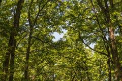 Paisaje de la maleza del bosque dentro de un bosque en las monta?as de Apennines imagen de archivo libre de regalías