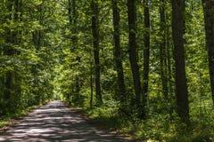 Paisaje de la maleza del bosque dentro de un bosque en las monta?as de Apennines fotos de archivo libres de regalías