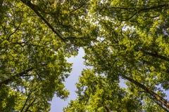Paisaje de la maleza del bosque dentro de un bosque en las monta?as de Apennines imagen de archivo