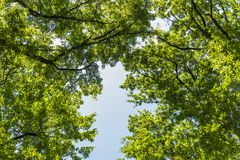 Paisaje de la maleza del bosque dentro de un bosque en las monta?as de Apennines fotografía de archivo