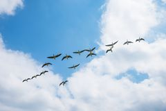 Paisaje de la migración de pájaro foto de archivo libre de regalías