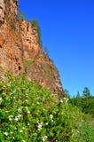 Paisaje de la montaña Alta roca amarilla en un fondo del cielo azul brillante Arbusto floreciente con las flores blancas Foto de archivo libre de regalías