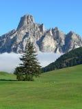 Paisaje de la montaña con el árbol Imagen de archivo libre de regalías