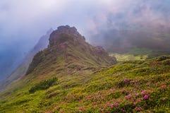 Paisaje de la montaña con las flores en el derecho floreciente de la niebla de la mañana Imágenes de archivo libres de regalías