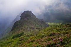 Paisaje de la montaña con las flores en el derecho floreciente de la niebla de la mañana Foto de archivo