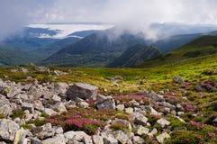 Paisaje de la montaña con las flores Rododendro floreciente Carpathi Fotos de archivo libres de regalías