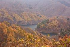 Paisaje de la montaña con los árboles de pino amarillo en otoño en Bandai Azuma Lakeline - Yama, Fukushima, Japón imagen de archivo