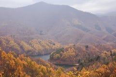 Paisaje de la montaña con los árboles de pino amarillo en otoño en Bandai Azuma Lakeline - Yama, Fukushima, Japón fotos de archivo