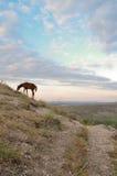 Paisaje de la montaña con los caballos Fotos de archivo