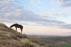 Paisaje de la montaña con los caballos Imagenes de archivo