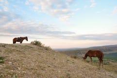 Paisaje de la montaña con los caballos Foto de archivo