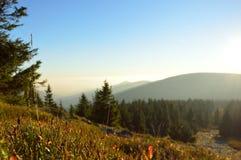 Paisaje de la montaña con muchos arbustos de la baya Fotografía de archivo libre de regalías