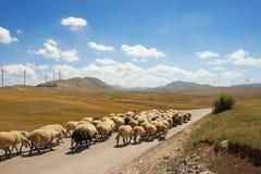 Paisaje de la montaña con una manada de las ovejas que caminan a lo largo del camino y de los windwills en el fondo Balcanes, Mon Imagenes de archivo
