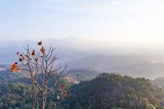 Paisaje de la montaña de la madrugada con el árbol solo en Umphang Provincia de Mae Hong Son, Tailandia foto de archivo libre de regalías